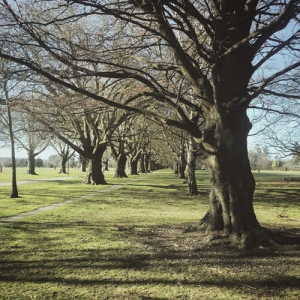 Hagley Park, the green haven in the middle of the city just two minutes from our Christchurch 'home.'
