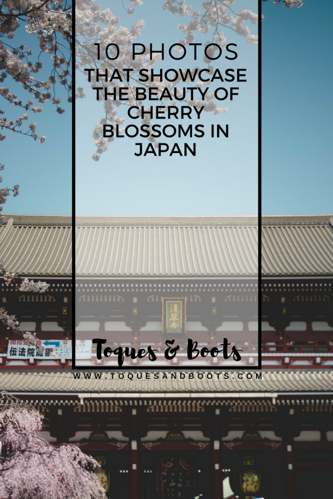 """""""What a strange thing! To be alive beneath cherry blossoms."""" - Kobayashi Issa. These words do not have full meaning until you have truly experienced cherry blossoms in Japan. Not convinced? Let these 10 photos prove exactly how beautiful cherry blossoms in Japan actually are."""